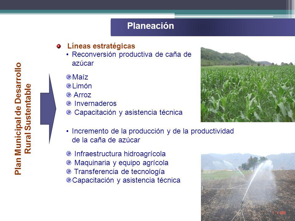 Reconversión productiva de caña de azúcar Maíz Limón Arroz Invernaderos Capacitación y asistencia técnica Líneas estratégicas Planeación Plan Municipal de Desarrollo Rural Sustentable Incremento de la producción y de la productividad de la caña de azúcar Infraestructura hidroagrícola Maquinaria y equipo agrícola Transferencia de tecnología Capacitación y asistencia técnica