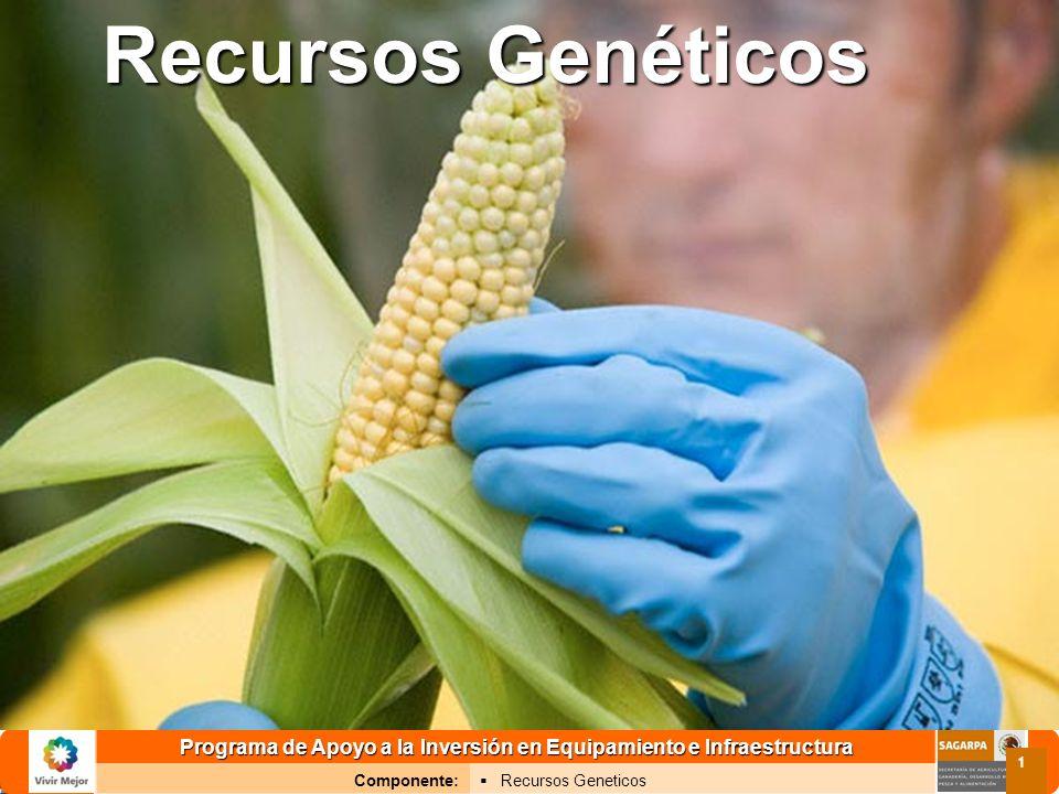 Programa de Apoyo a la Inversión en Equipamiento e Infraestructura Componente: Recursos Geneticos 1 Recursos Genéticos