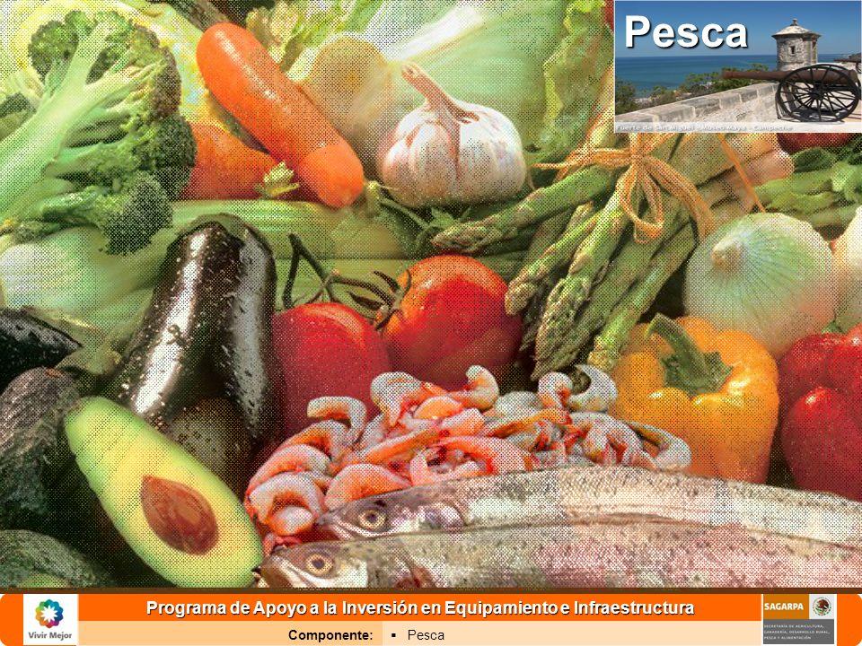 Programa de Apoyo a la Inversión en Equipamiento e Infraestructura Componente: PescaPesca