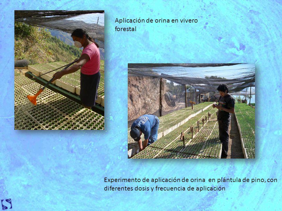 Aplicación de orina en vivero forestal Experimento de aplicación de orina en plántula de pino, con diferentes dosis y frecuencia de aplicación