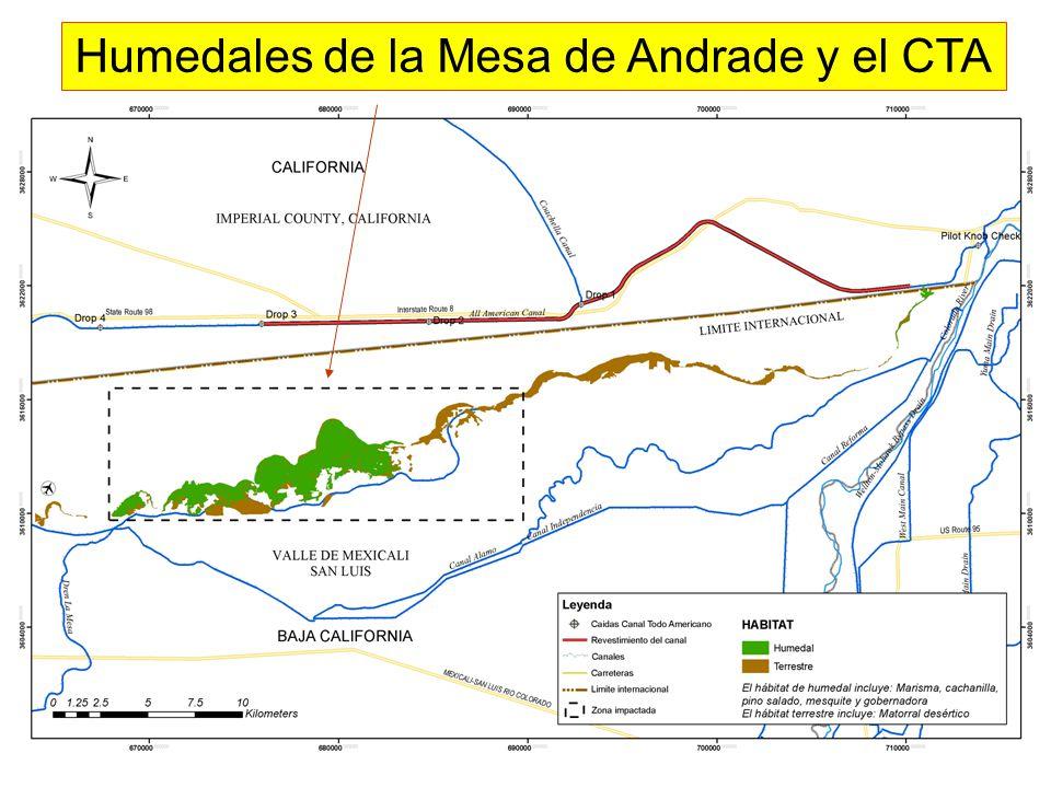 Humedales de la Mesa de Andrade y el CTA