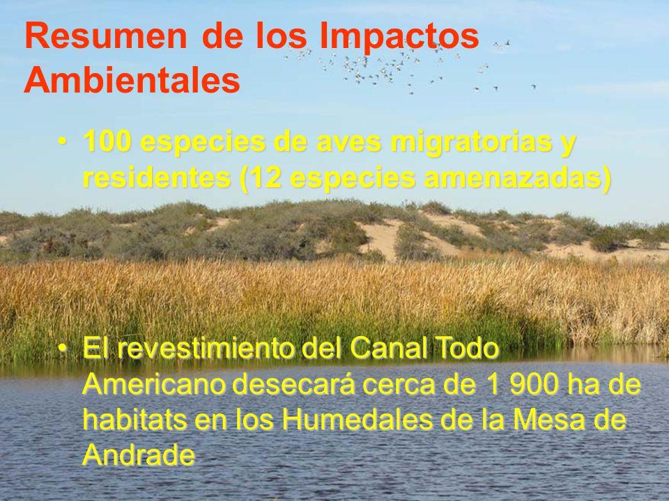 100 especies de aves migratorias y residentes (12 especies amenazadas)100 especies de aves migratorias y residentes (12 especies amenazadas) El revest
