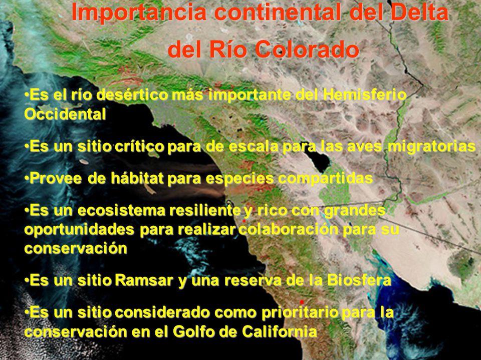 Importancia continental del Delta del Río Colorado del Río Colorado Es el río desértico más importante del Hemisferio OccidentalEs el río desértico má