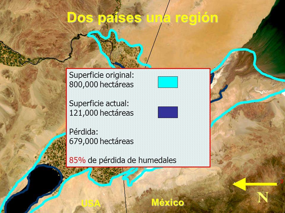 N Dos países una región México USA Superficie original: 800,000 hectáreas Superficie actual: 121,000 hectáreas Pérdida: 679,000 hectáreas 85% de pérdi