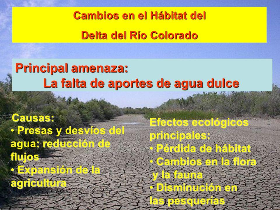 Cambios en el Hábitat del Delta del Río Colorado : reducción de flujos Presas y desvíos del agua: reducción de flujos Expansión de la agricultura Expa