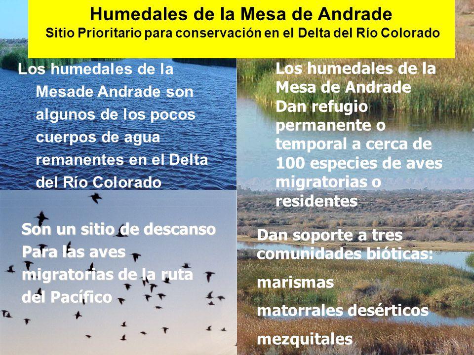 Humedales de la Mesa de Andrade Sitio Prioritario para conservación en el Delta del Río Colorado Los humedales de la Mesade Andrade son algunos de los