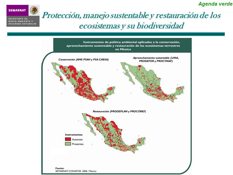 Conservación y Restauración Planeación y Organización Forestal Producción y Productividad Generación de Infraestructura Protección, manejo sustentable y restauración de los ecosistemas y su biodiversidad En el presente ciclo se plantarán 250 millones de árboles en México: la cuarta parte de la meta establecida para todo el mundo por el PNUMA Agenda verde