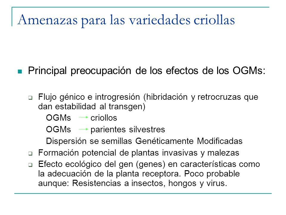 Amenazas para las variedades criollas Principal preocupación de los efectos de los OGMs: Flujo génico e introgresión (hibridación y retrocruzas que da