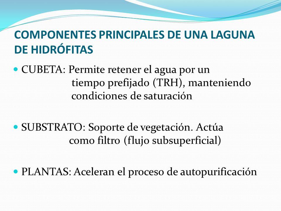 COMPONENTES PRINCIPALES DE UNA LAGUNA DE HIDRÓFITAS CUBETA: Permite retener el agua por un tiempo prefijado (TRH), manteniendo condiciones de saturaci