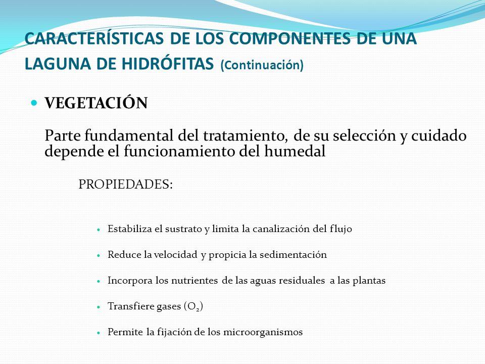 CARACTERÍSTICAS DE LOS COMPONENTES DE UNA LAGUNA DE HIDRÓFITAS (Continuación) VEGETACIÓN Parte fundamental del tratamiento, de su selección y cuidado