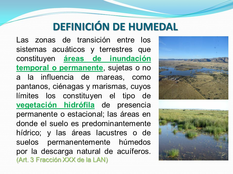 DEFINICIÓN DE HUMEDAL (Art. 3 Fracción XXX de la LAN) Las zonas de transición entre los sistemas acuáticos y terrestres que constituyen áreas de inund