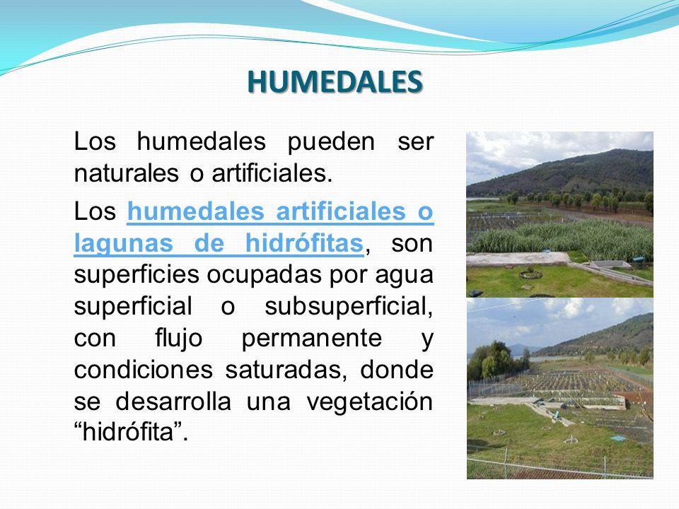 Los humedales pueden ser naturales o artificiales. Los humedales artificiales o lagunas de hidrófitas, son superficies ocupadas por agua superficial o