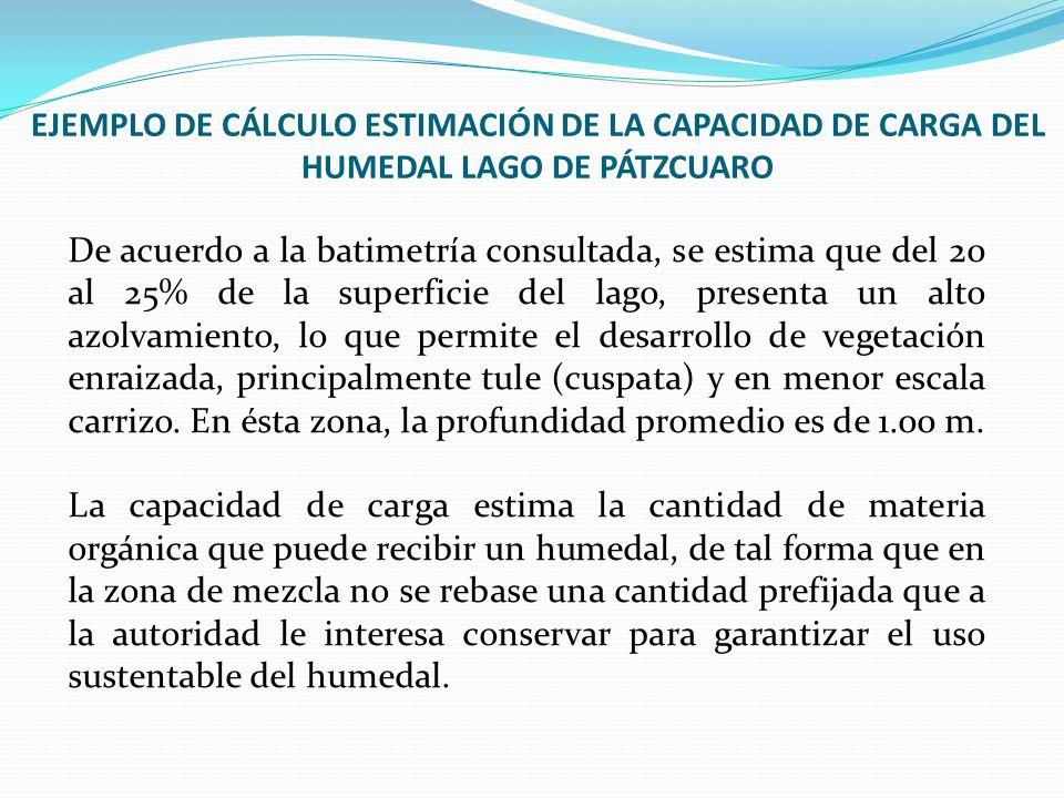 De acuerdo a la batimetría consultada, se estima que del 20 al 25% de la superficie del lago, presenta un alto azolvamiento, lo que permite el desarro