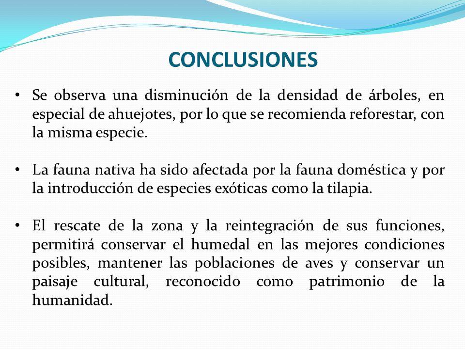 CONCLUSIONES Se observa una disminución de la densidad de árboles, en especial de ahuejotes, por lo que se recomienda reforestar, con la misma especie