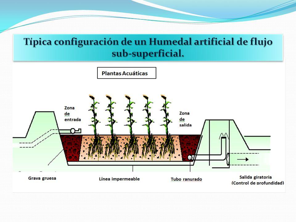 CONCLUSIONES Los canales de Xochimilco presentan la eutroficación típica de aguas residuales, con baja velocidad de circulación.