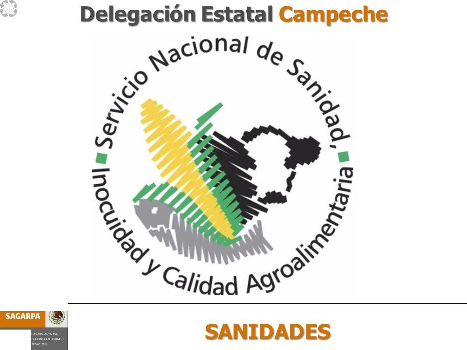 Programa de Prevención y Manejo de Riesgos Subcomponente SANIDADES SANIDADES Delegación Estatal Campeche