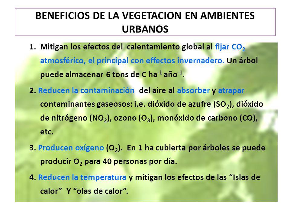BENEFICIOS DE LA VEGETACION EN AMBIENTES URBANOS 1.Mitigan los efectos del calentamiento global al fijar CO 2 atmosférico, el principal con effectos i