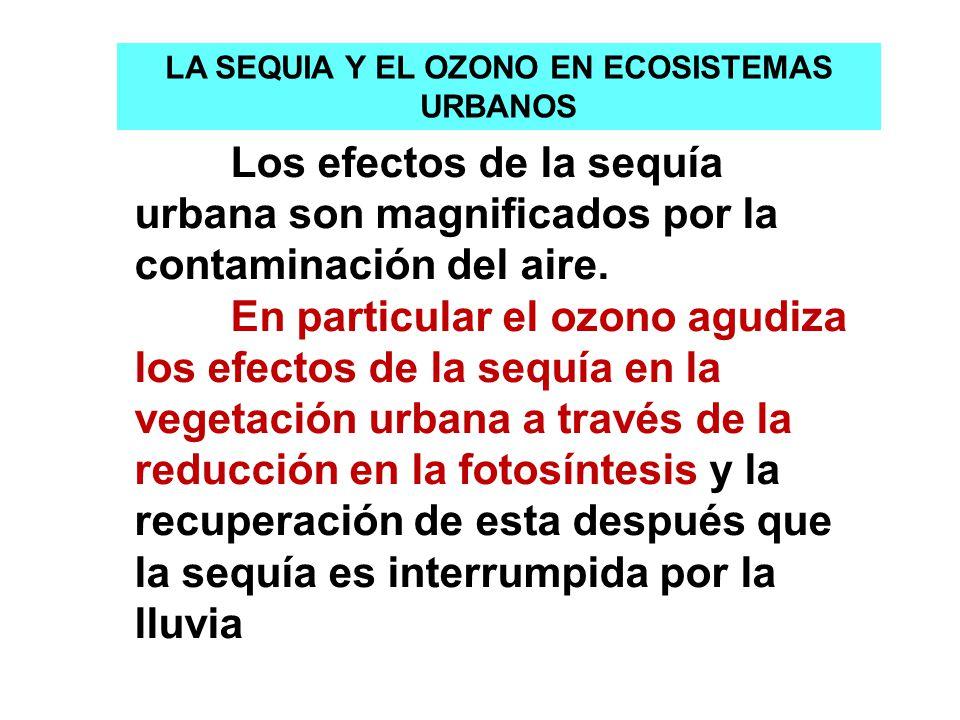 Los efectos de la sequía urbana son magnificados por la contaminación del aire. En particular el ozono agudiza los efectos de la sequía en la vegetaci