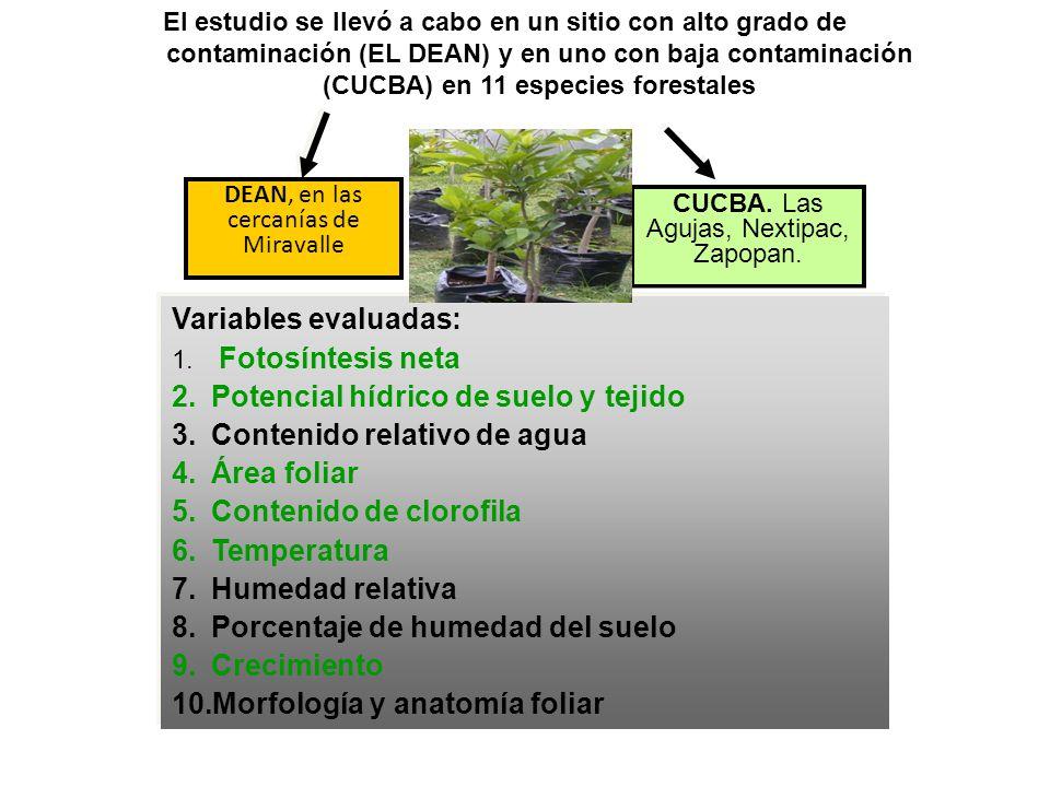 DEAN, en las cercanías de Miravalle El estudio se llevó a cabo en un sitio con alto grado de contaminación (EL DEAN) y en uno con baja contaminación (