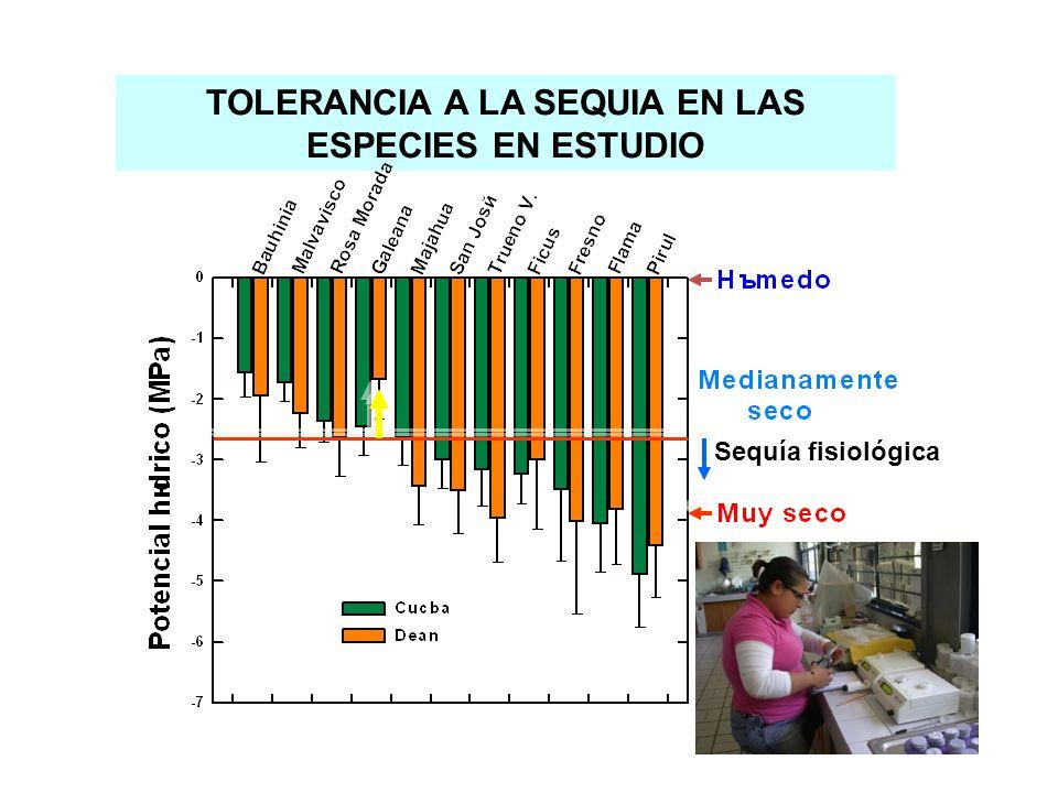 TOLERANCIA A LA SEQUIA EN LAS ESPECIES EN ESTUDIO Sequía fisiológica