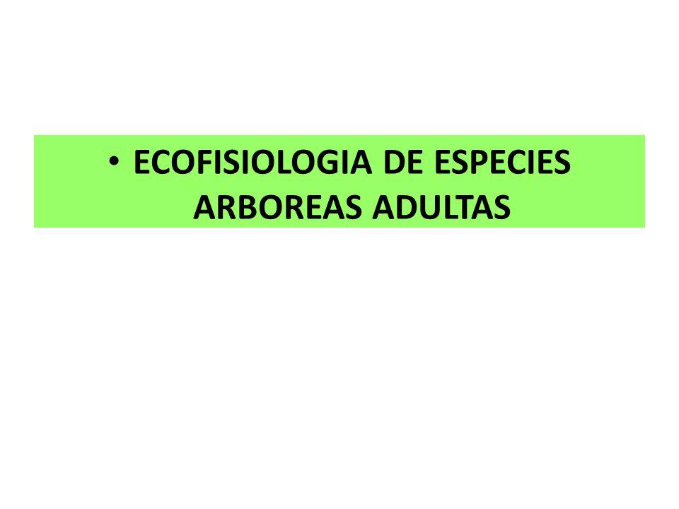 ECOFISIOLOGIA DE ESPECIES ARBOREAS ADULTAS