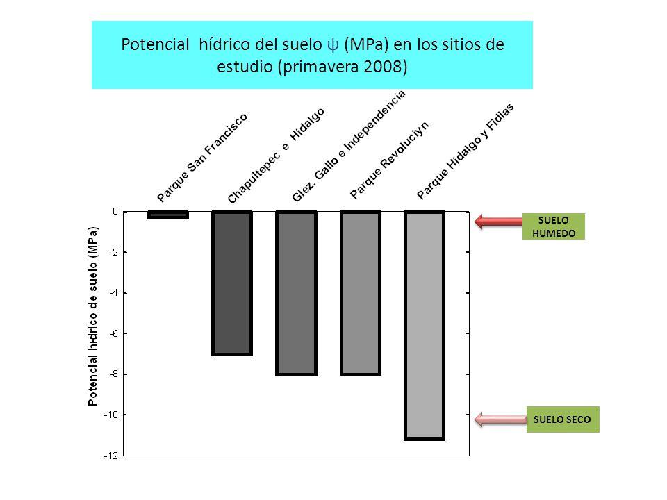 SUELO HUMEDO SUELO SECO Potencial hídrico del suelo ψ (MPa) en los sitios de estudio (primavera 2008)