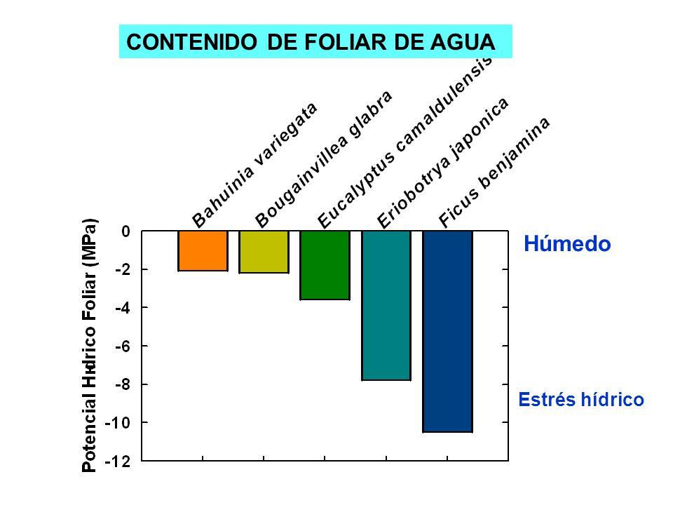 Húmedo Estrés hídrico CONTENIDO DE FOLIAR DE AGUA