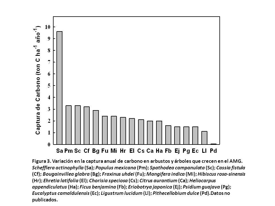 Figura 3. Variación en la captura anual de carbono en arbustos y árboles que crecen en el AMG. Schefflera actinophylla (Sa); Populus mexicana (Pm); Sp