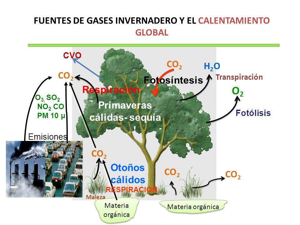 FUENTES DE GASES INVERNADERO Y EL CALENTAMIENTO GLOBAL Materia orgánica CO 2 H2OH2O O2O2 Transpiración Fotólisis Maleza CO 2 Otoños cálidos Primaveras