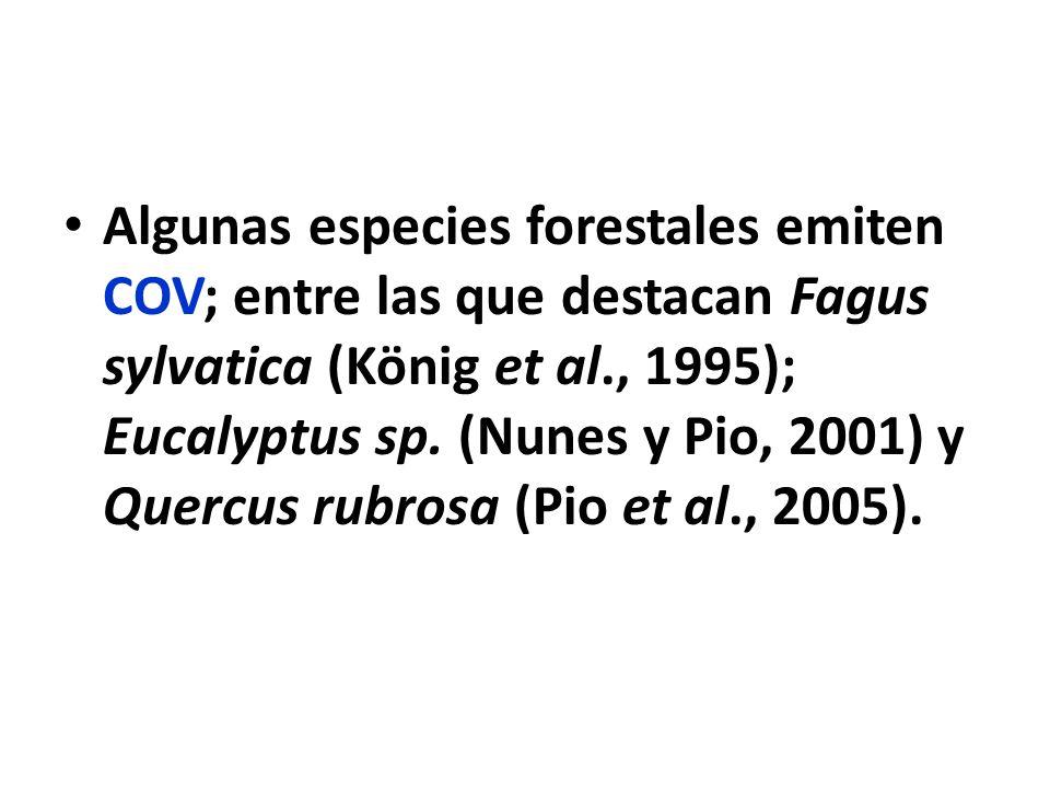Algunas especies forestales emiten COV; entre las que destacan Fagus sylvatica (König et al., 1995); Eucalyptus sp. (Nunes y Pio, 2001) y Quercus rubr