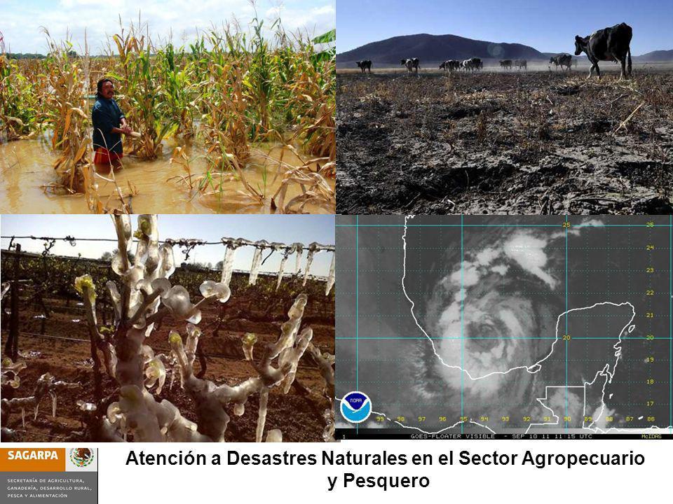 Programa de Prevención y Manejo de Riesgos SubcomponenteAtención a Desastres Nat. en el Sector Agrop. y Pesquero Atención a Desastres Naturales en el
