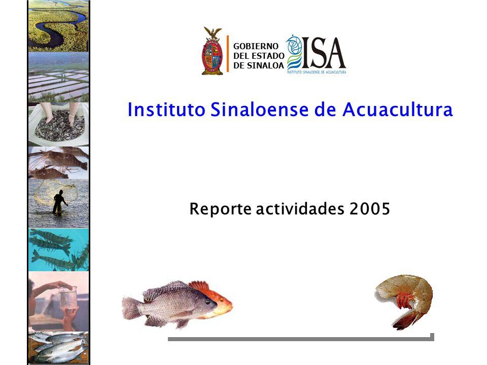 Instituto Sinaloense de Acuacultura Reporte actividades 2005 GOBIERNO DEL ESTADO DE SINALOA