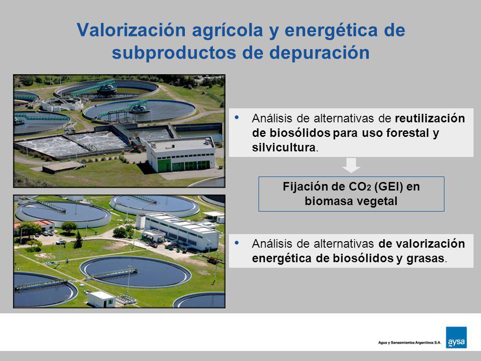 Valorización agrícola y energética de subproductos de depuración Fijación de CO 2 (GEI) en biomasa vegetal Análisis de alternativas de reutilización d