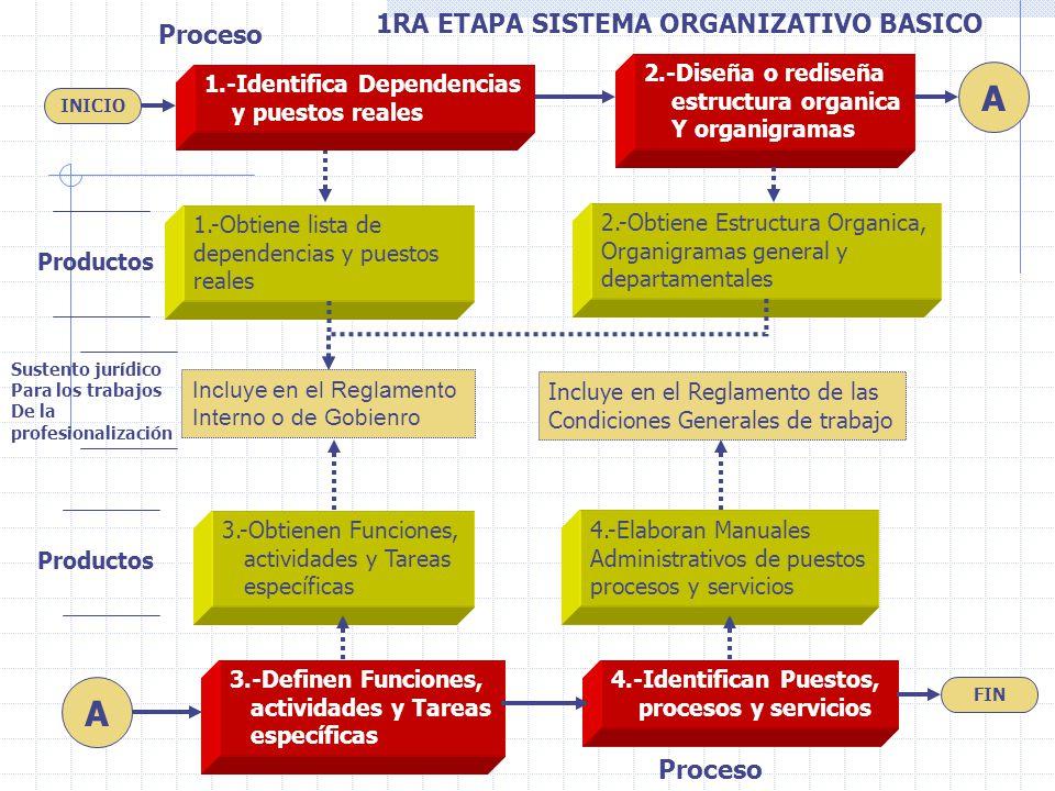 2.-Diseña o rediseña estructura organica Y organigramas 3.-Definen Funciones, actividades y Tareas específicas 4.-Identifican Puestos, procesos y serv