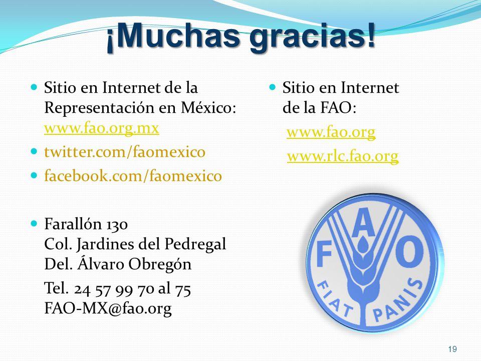 ¡Muchas gracias! 19 Sitio en Internet de la FAO: www.fao.org www.rlc.fao.org Sitio en Internet de la Representación en México: www.fao.org.mx www.fao.