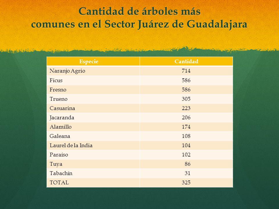 Cantidad de árboles más comunes en el Sector Juárez de Guadalajara EspecieCantidad Naranjo Agrio714 Ficus586 Fresno586 Trueno305 Casuarina223 Jacarand