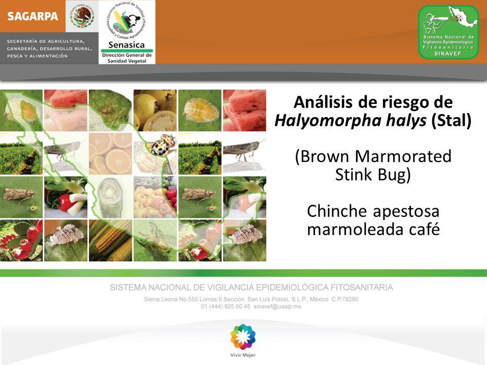 Análisis de riesgo de Halyomorpha halys (Stal) (Brown Marmorated Stink Bug) Chinche apestosa marmoleada café