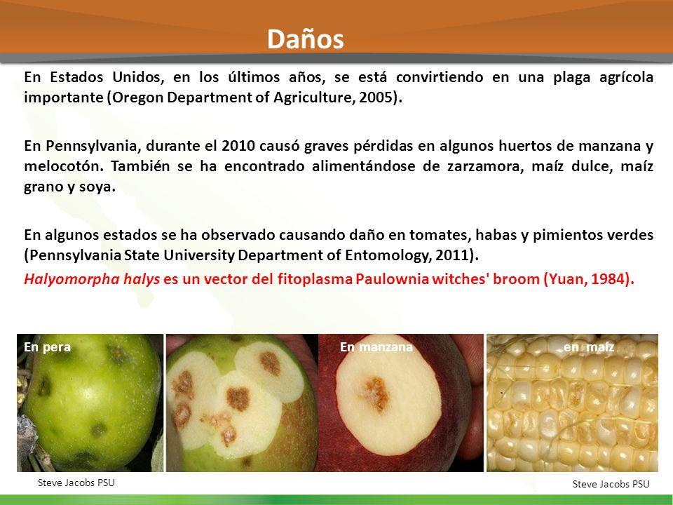 En Estados Unidos, en los últimos años, se está convirtiendo en una plaga agrícola importante (Oregon Department of Agriculture, 2005). En Pennsylvani