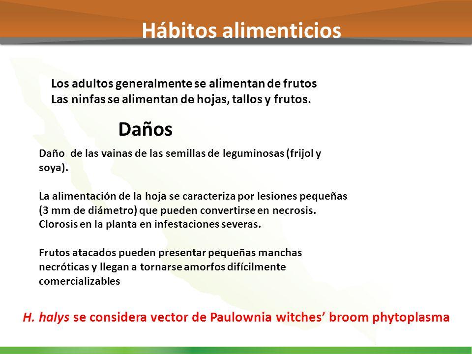 Los adultos generalmente se alimentan de frutos Las ninfas se alimentan de hojas, tallos y frutos. Daño de las vainas de las semillas de leguminosas (