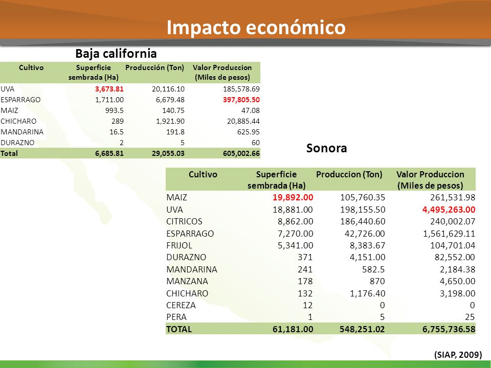 Baja california Sonora Impacto económico (SIAP, 2009) CultivoSuperficie sembrada (Ha) Producción (Ton)Valor Produccion (Miles de pesos) UVA3,673.8120,