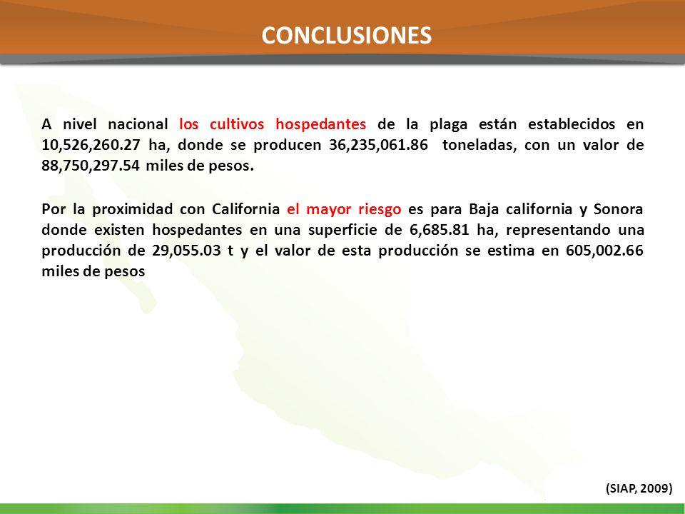 A nivel nacional los cultivos hospedantes de la plaga están establecidos en 10,526,260.27 ha, donde se producen 36,235,061.86 toneladas, con un valor