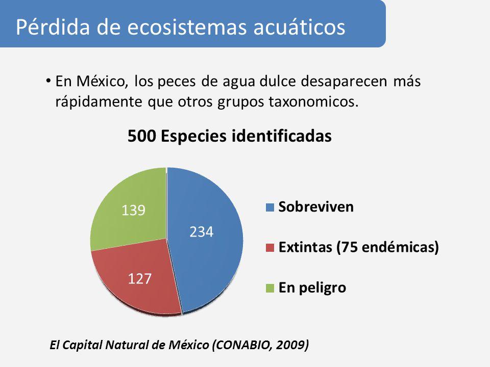 En México, los peces de agua dulce desaparecen más rápidamente que otros grupos taxonomicos. Pérdida de ecosistemas acuáticos El Capital Natural de Mé