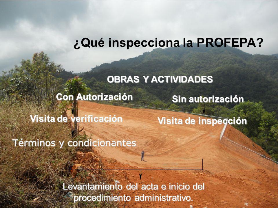 ¿Qué inspecciona la PROFEPA? OBRAS Y ACTIVIDADES Con Autorización Visita de verificación Visita de verificación Términos y condicionantes Visita de in