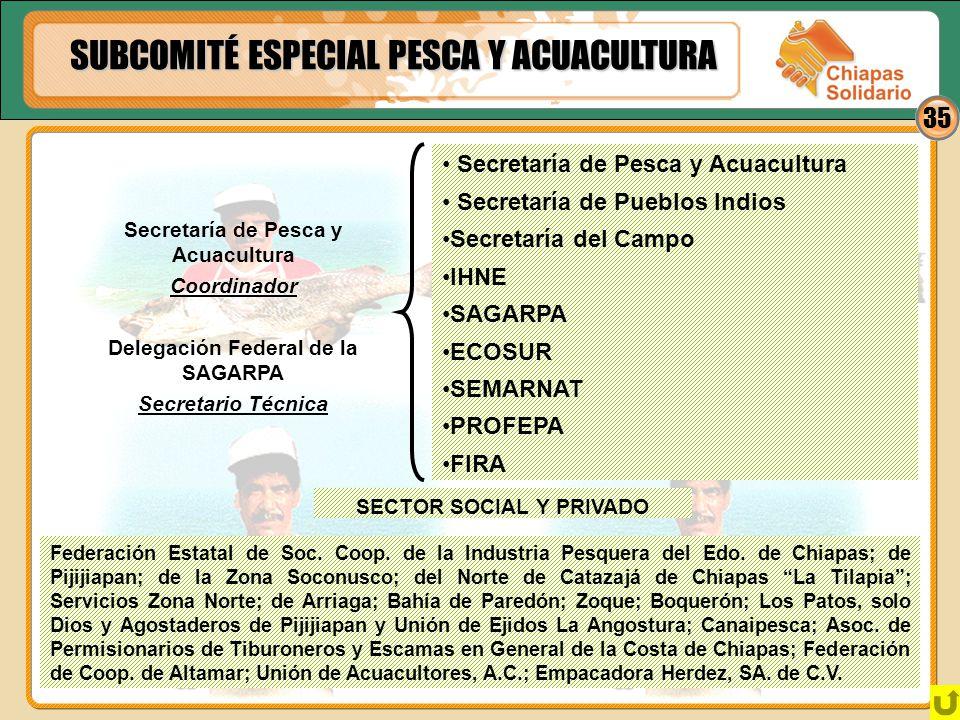 35 SUBCOMITÉ ESPECIAL PESCA Y ACUACULTURA Secretaría de Pesca y Acuacultura Secretaría de Pueblos Indios Secretaría del Campo IHNE SAGARPA ECOSUR SEMA