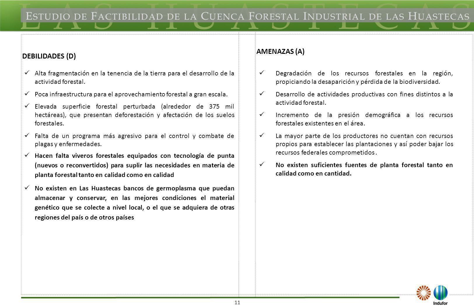 11 DEBILIDADES (D) AMENAZAS (A) Alta fragmentación en la tenencia de la tierra para el desarrollo de la actividad forestal. Poca infraestructura para