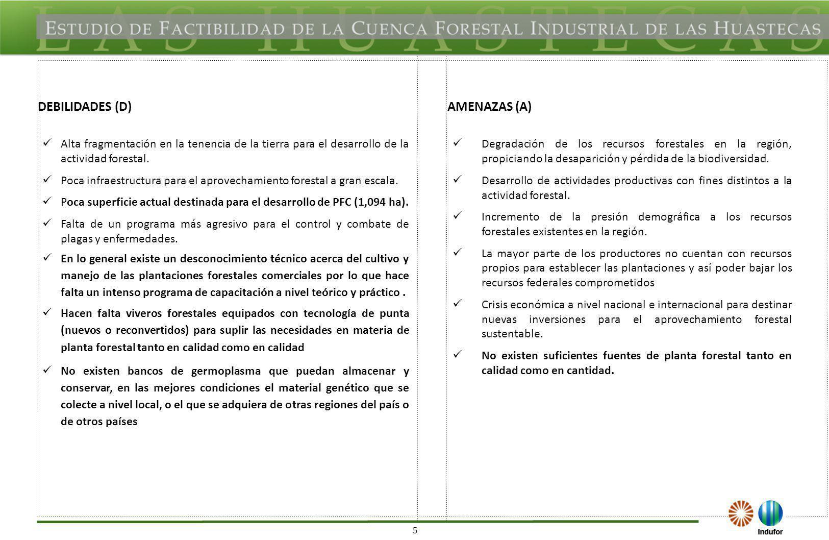 5 DEBILIDADES (D)AMENAZAS (A) Alta fragmentación en la tenencia de la tierra para el desarrollo de la actividad forestal. Poca infraestructura para el