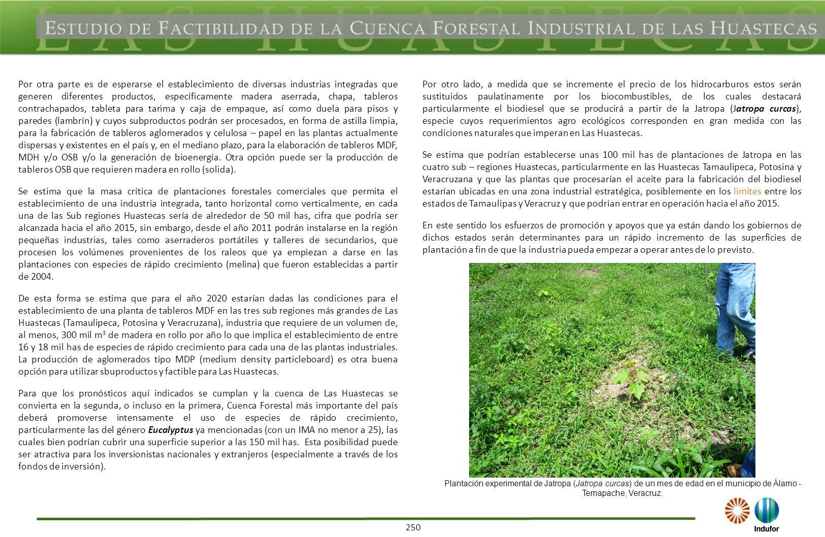 261 Derivado de la información anterior, en los siguientes cuadros se indican los volúmenes a obtener por especie como consecuencia de la cosecha final de la superficie de plantaciones forestales comerciales actualmente establecida en la Huasteca Tamaulipeca, así como el año en el cual se cosecharían.