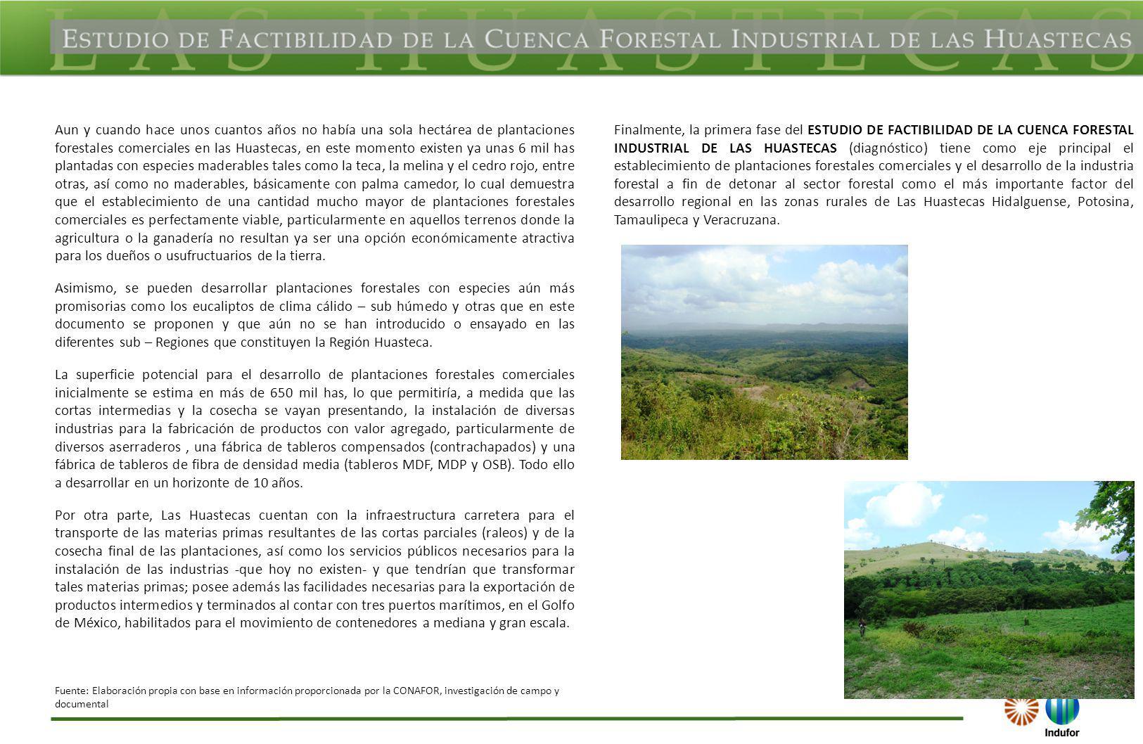Aun y cuando hace unos cuantos años no había una sola hectárea de plantaciones forestales comerciales en las Huastecas, en este momento existen ya una