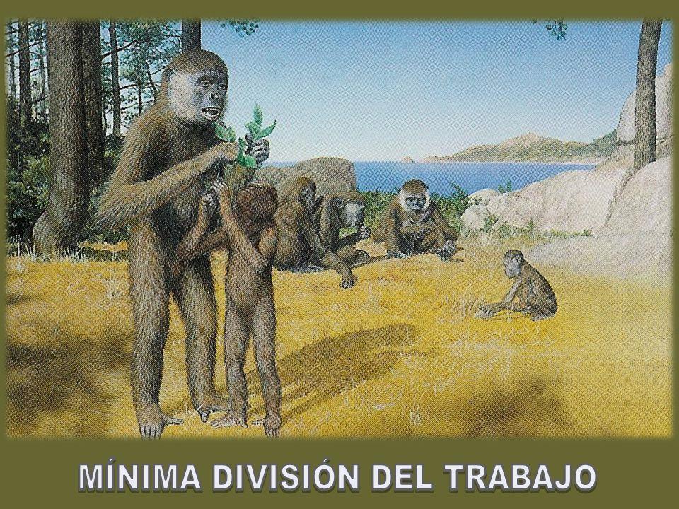 Homo habilis Homo sapiens