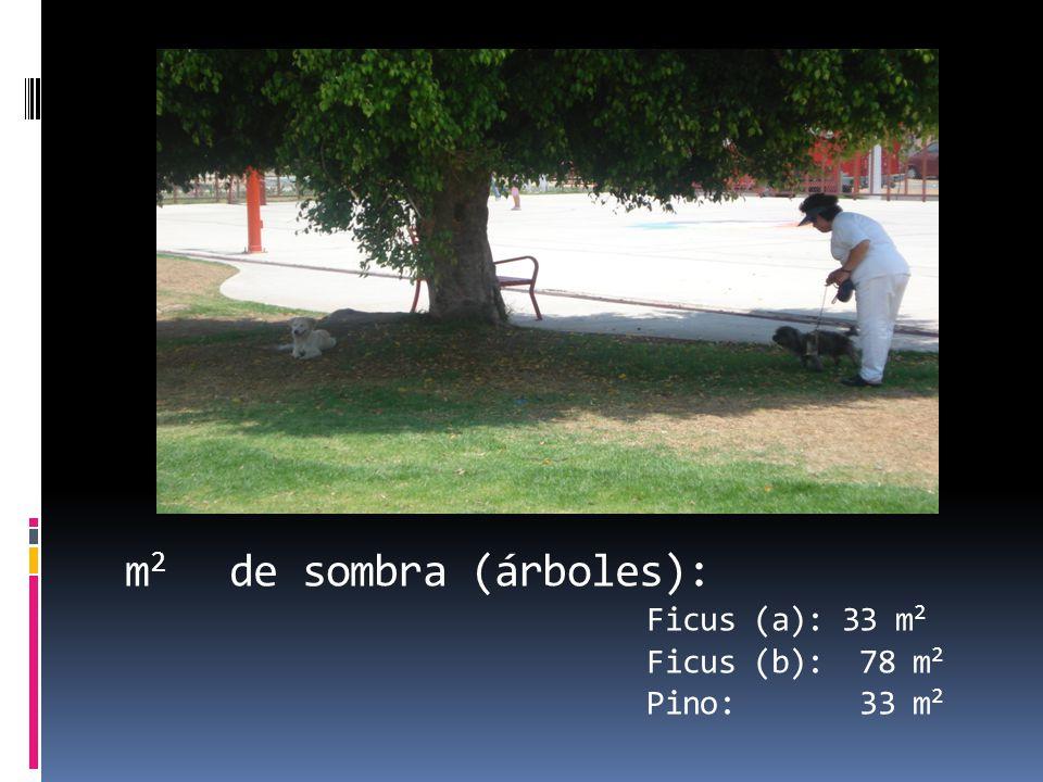 m 2 de sombra (árboles): Ficus (a): 33 m 2 Ficus (b): 78 m 2 Pino: 33 m 2